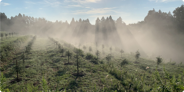 山間部の活性化と地球温暖化防止対策にも貢献するオリーブ栽培